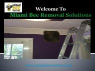 Miami Bee Removal