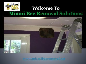 Miami Bee Removal