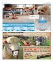 Mid Rivers Newsmagazine 5-3-17 - Page 2