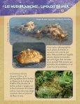 Fiches Faune Bord de Mer Pindaï - Page 6