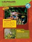 Prendre le maquis, fiches faune - Page 5