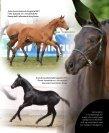 Rosentanz Fürstenball Hoftanz - HP Horses - Page 7