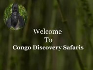 Gorilla Trekking Safaris in Congo