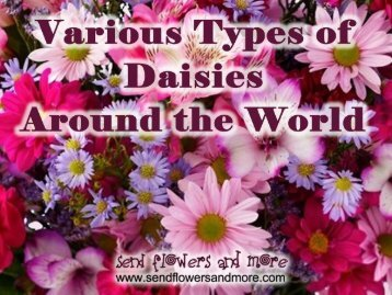 Types of varities in daisy flowers