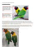 Lovebird - Page 3