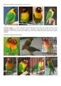 Lovebird - Page 4