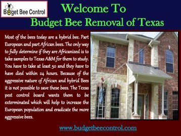 Bee Extermination Houston| Budget Bee Control