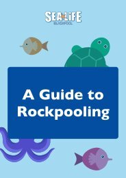 Sea Life - A Guide to Rockpooling
