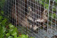 Michigan Animal Removal and Wildlife Control Services