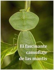 Erick Malpica Flores - Conoce algunas de las Mantis Religiosas más extrañas