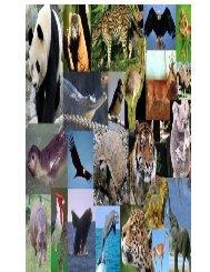 Especies endémicas en la región andina2