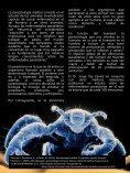 VERMES REVISTA - Page 5