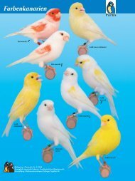 Farbenkanarien - Kleintiere Schweiz