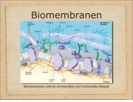Biomembranen sind ein strukturelles und funktionelles Mosaik