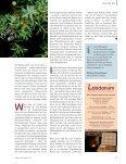 Duft- und Heilräuchern ist eine alte Tradition in ... - Dr. Christine Volm - Seite 4