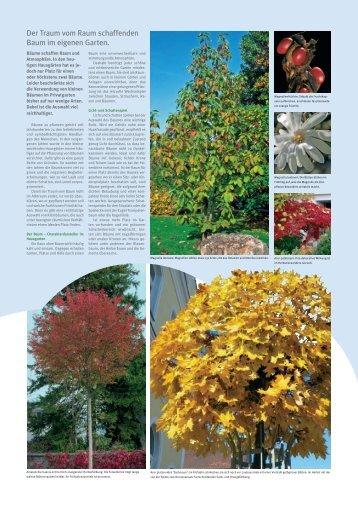 Der Traum vom Raum schaffenden Baum im ... - Fuhrer AG Gartenbau