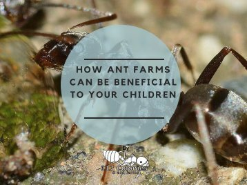 How Ant Farms Can be Beneficial To Your Children.
