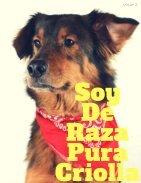 Pets Film studio magazin - Page 3