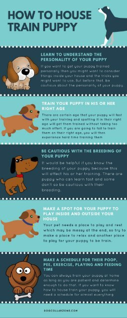 How to House Train Puppy