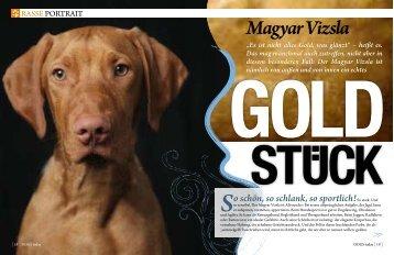 """Magyar Vizsla """"Es ist nicht alles Gold, was glänzt"""" - DOGS today"""
