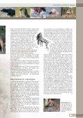 Jagdhunderassen - Seite 3