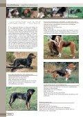 Jagdhunderassen - Seite 4