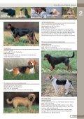 Jagdhunderassen - Seite 5