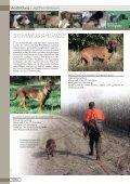 Jagdhunderassen - Seite 6