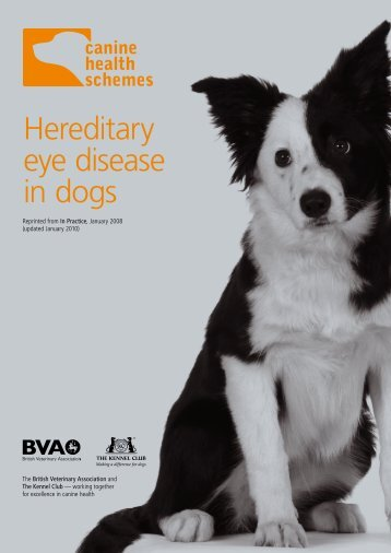 Hereditary eye disease in dogs - British Veterinary Association