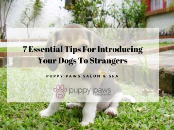 7 Essential Tips For Introducing Your Dogs To Strangers