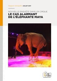 Le cas alarmant de l'éléphante Maya