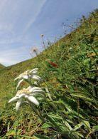 Alpsommer&Viehscheid 2014 - Page 7