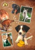 Plätzchen - Das Kundenmagazin von dog&dino - Ausgabe 1, 2017 - Seite 7