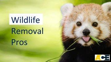 Ace Wildlife Removal Company