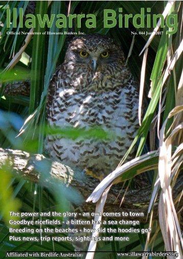 Illawarra Birding 2017-06