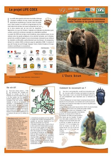 L'Ours brun - WWF France