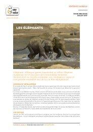 Fiche éléphant