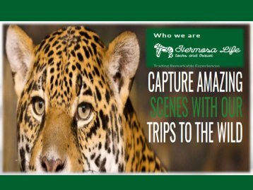 African Safari Tours