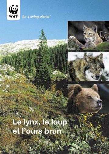 Le lynx, le loup et l'ours brun - WWF Schweiz