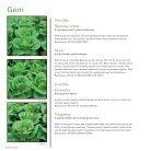 Glasshouse Lettuce 2018 - Page 6