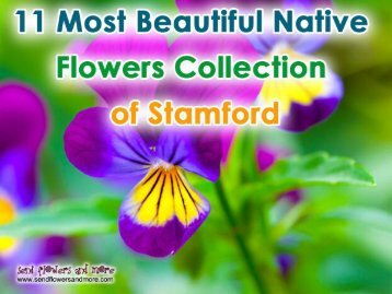 11 Most Beautiful Native Flowers Collection of Stamford