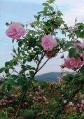 ROSE - Eine Reise ins Rosental - Seite 2