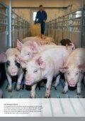 Schwein - Seite 5
