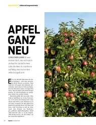 Apfel GAnz neu - Die Aufmacher