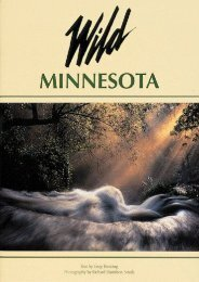 Wild Minnesota