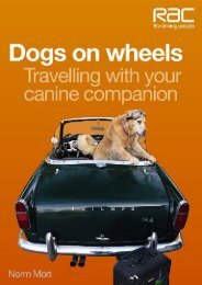 Dogs on Wheels: Travelling With Your Canine Companion