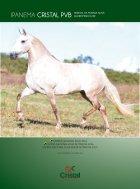 revista cruzilia - Page 4