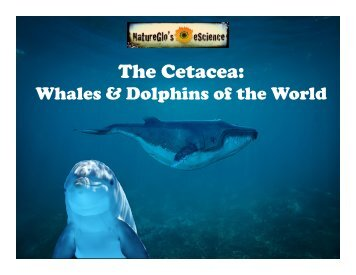 Whales and Dolphins of the World Revised52117