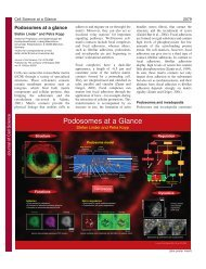 Podosomes at a Glance - Journal of Cell Science - The Company of ...