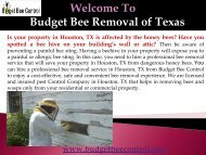 Bee removal Company in Texas (2)